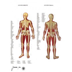Skeletal system chart BIG